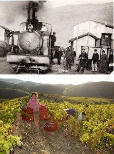 wine-making@2x